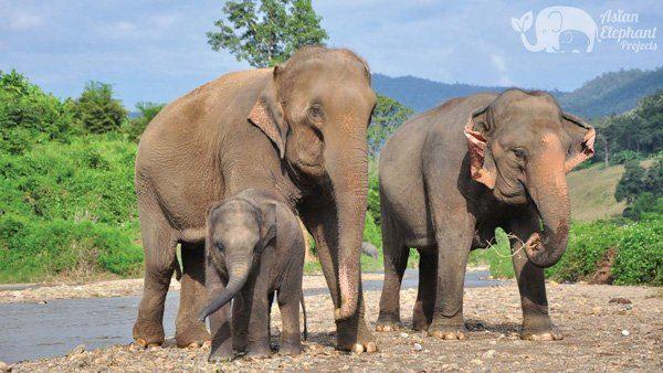 Elephant family at Elephant Twilight ethical elephant sanctuary