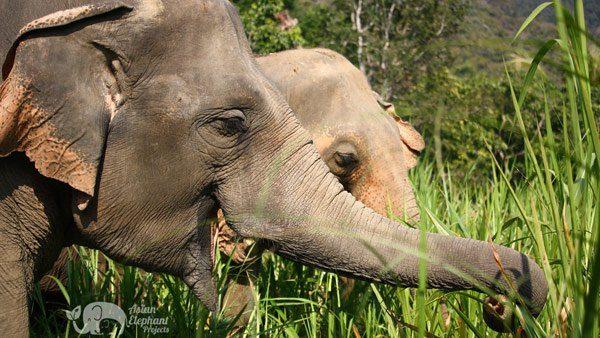 elephant wellness elephant sanctuary chiang mai