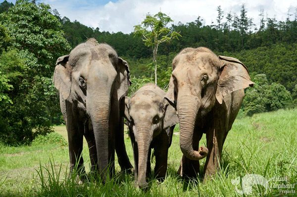 Elephants at Journey to freedom elephant sanctuary in Thailand