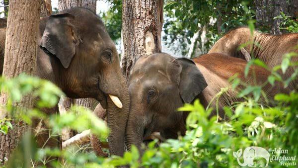 Karen Elephant Experience Ethical Elephant Tour