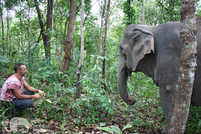 observing elephants in the forest Thailand