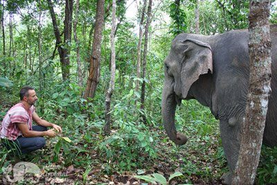 watching elephant in the jungle at chiang mai elephant sanctuary