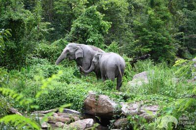Karen Elephant Oasis Chiang Mai