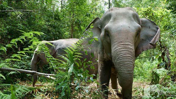 Karen_Elephant_Oasis