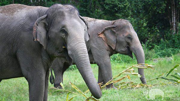 Karen_Elephant_Project