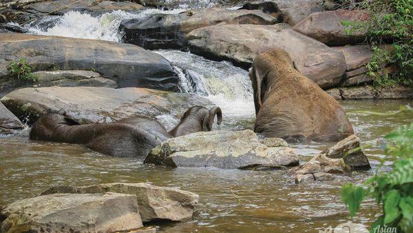Elephants bathing at Elephant Elephant Reserve
