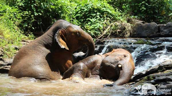 Elephants playing in the waterfall at Karen Elephant Reserve