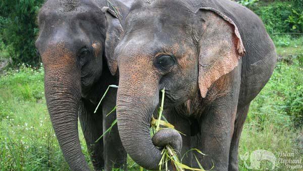 Karen_Elephant_Retreat