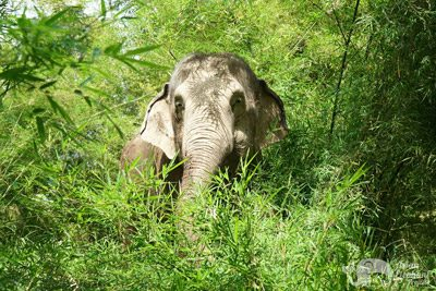 elephant sanctuary Thailand Chiang Mai