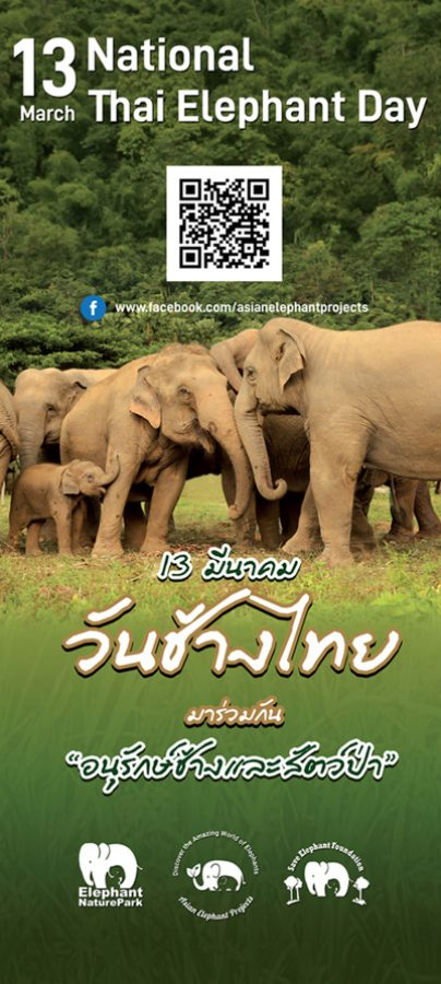 elephants living in sanctuary