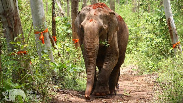 Elepehants roaming the forest at Sunshine for Elephants ethical elephant sanctuary